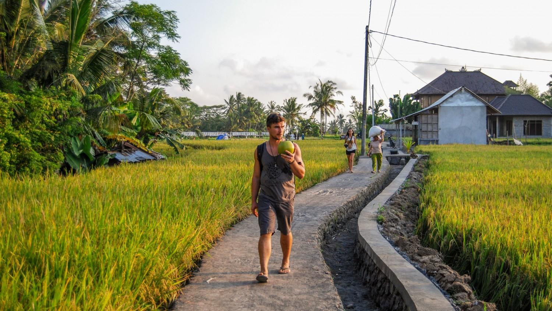 Bali tarasy ryżowe (3)