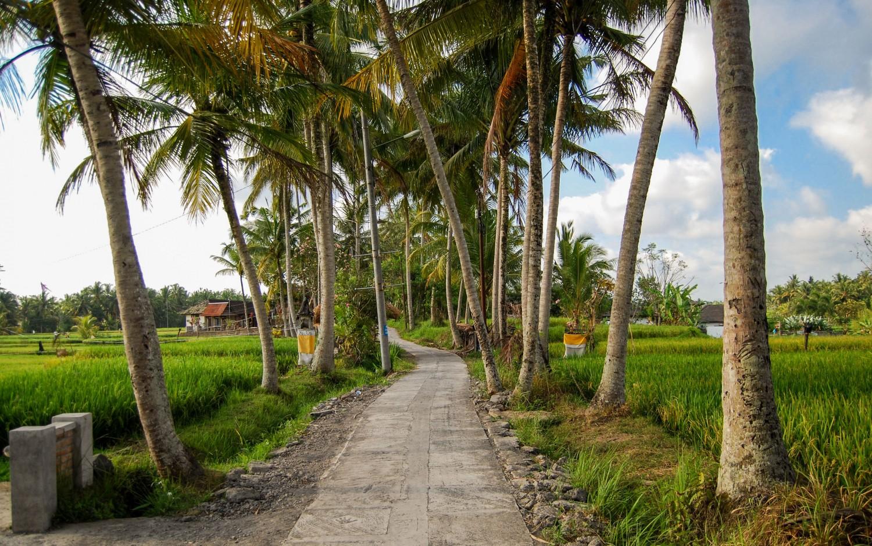 Bali tarasy ryżowe (9)