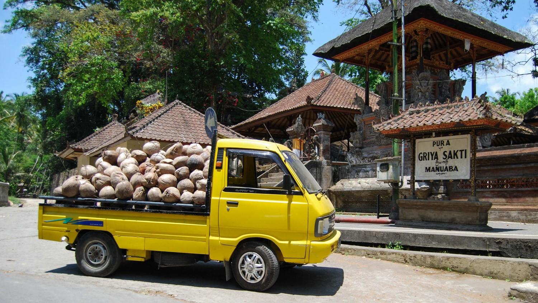 coconuts Bali