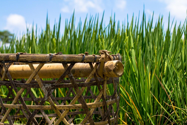 Tarasy ryżowe Tegalalang (18)