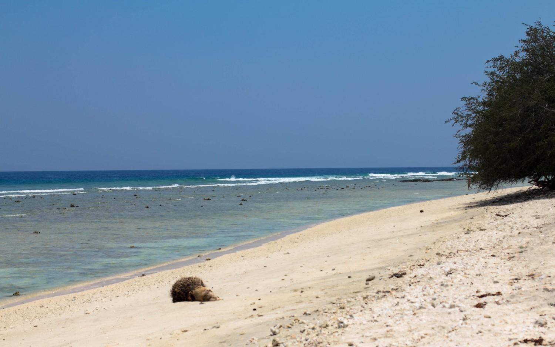 Gili Trawangan beach (6)