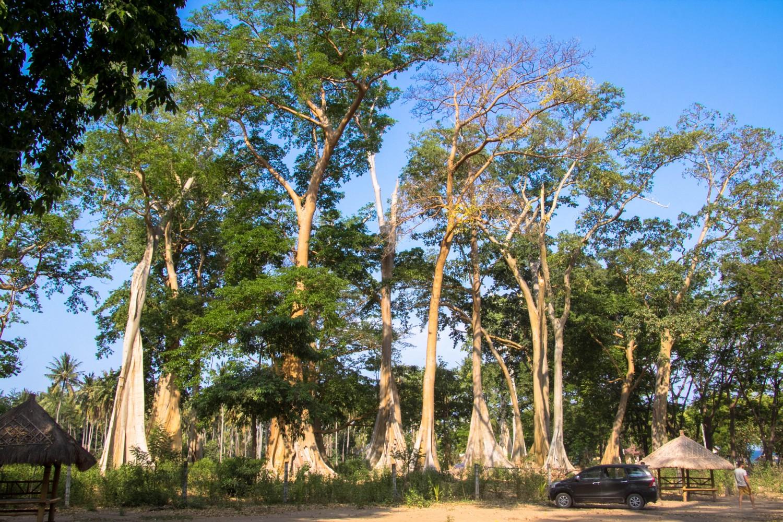 Lomok island Indonesia (23)