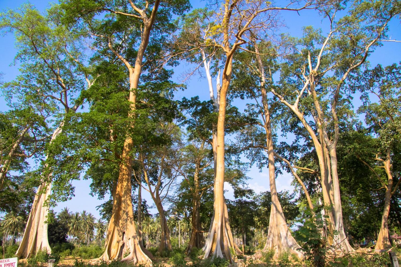 Lomok island Indonesia (24)