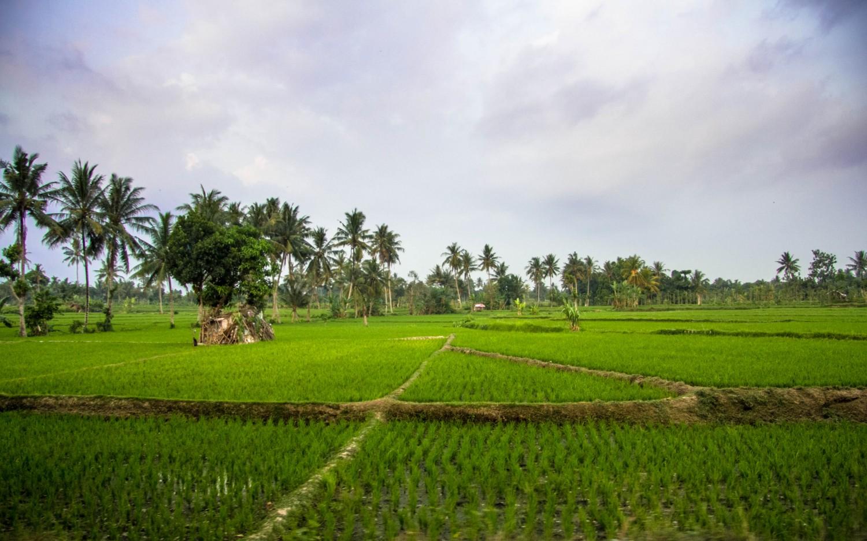 Lomok island Indonesia (7)