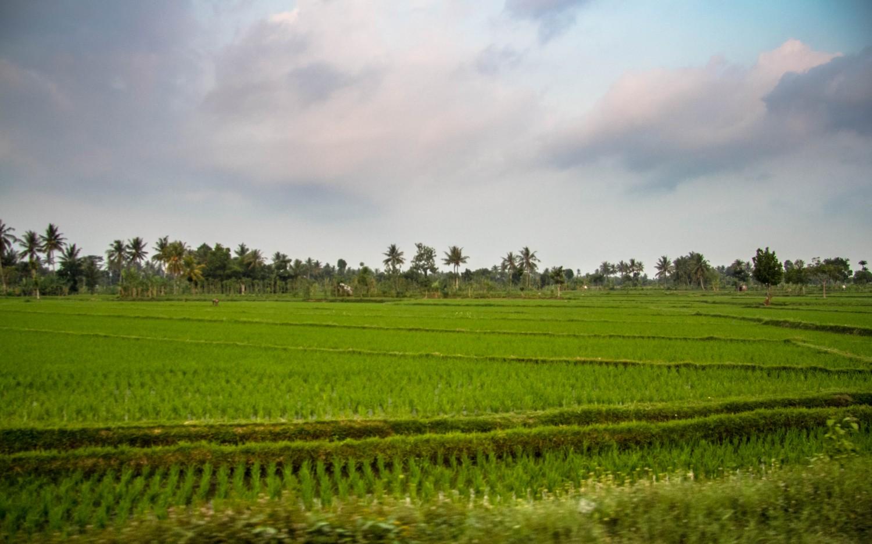 Lomok island Indonesia (8)
