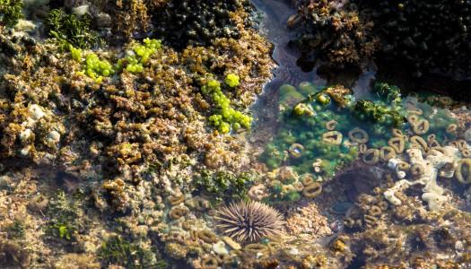 Morskie skarby na plaży Mawum