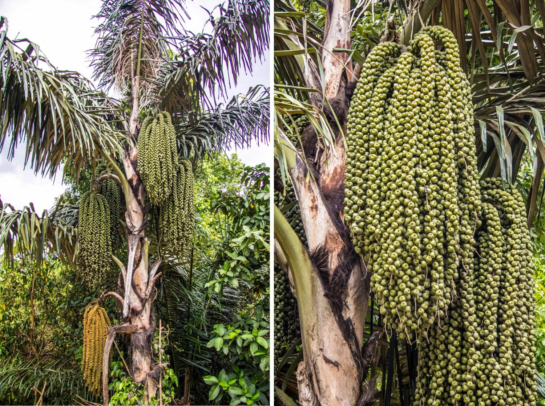 Flores Indonesia (4)