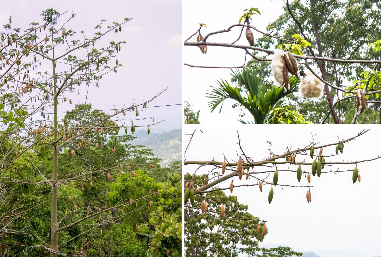 Flores Indonesia (6)