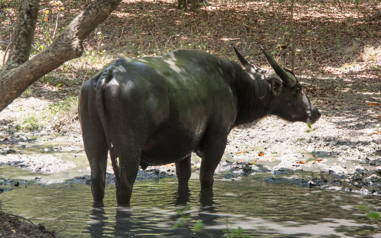 Indonezja Komodo (37)