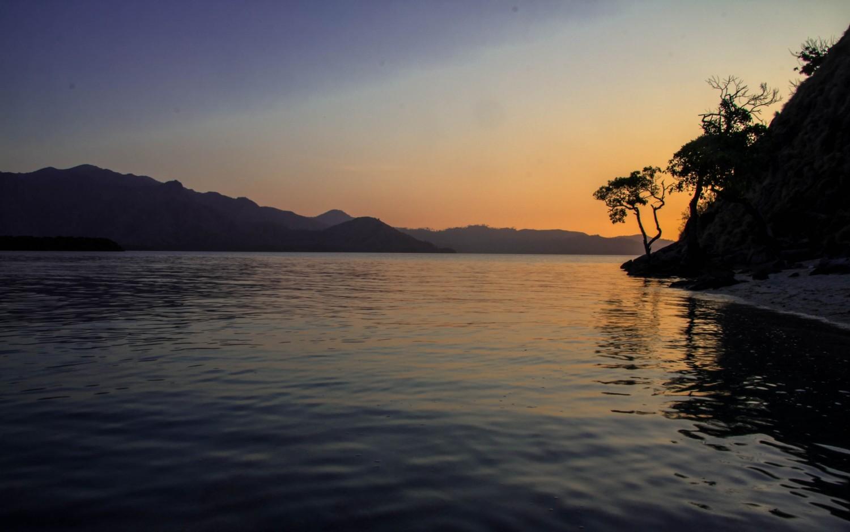 nietoperze Indonezja Kalong Island