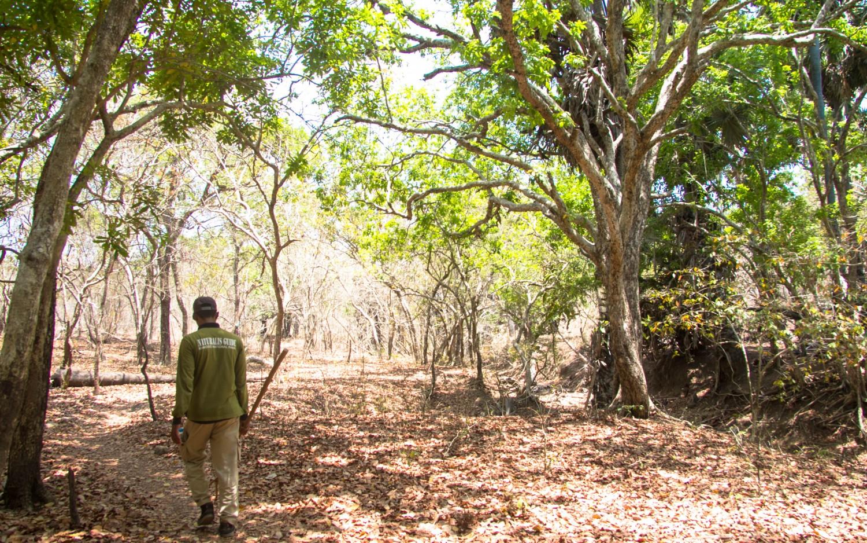 Trekking Komodo Rinca (1)