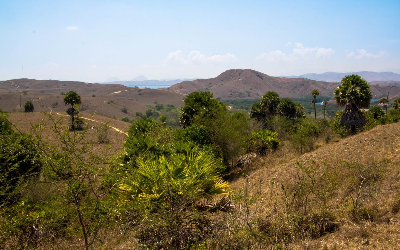 Trekking Komodo Rinca (12)