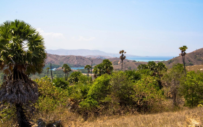 Trekking Komodo Rinca (13)