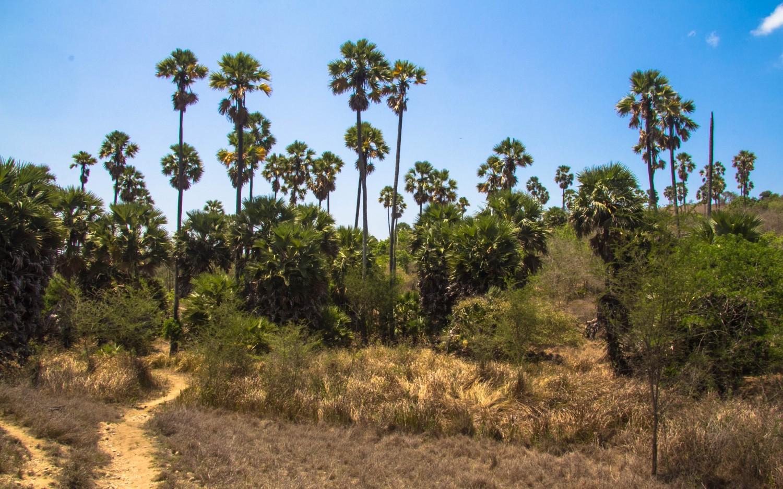 Trekking Komodo Rinca (3)