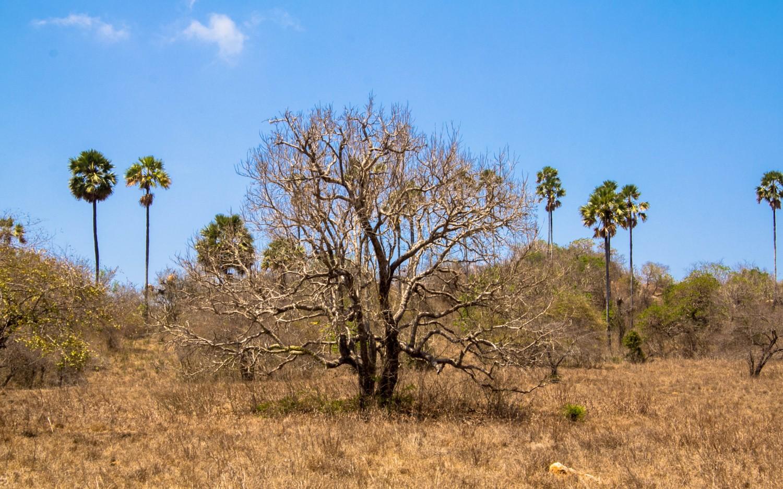 Trekking Komodo Rinca (5)