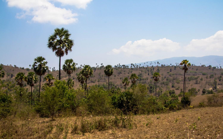 Trekking Komodo Rinca (7)
