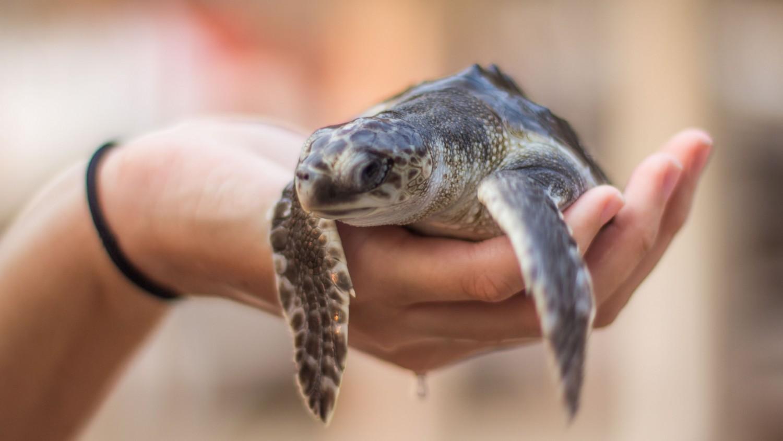 Żółwie morskie Indonezja Bali (2)