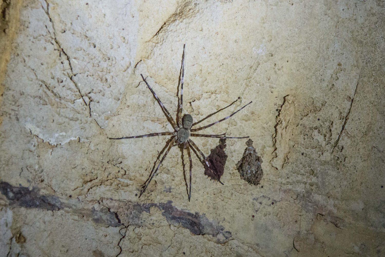 Ankarana caves Madagascar (3)