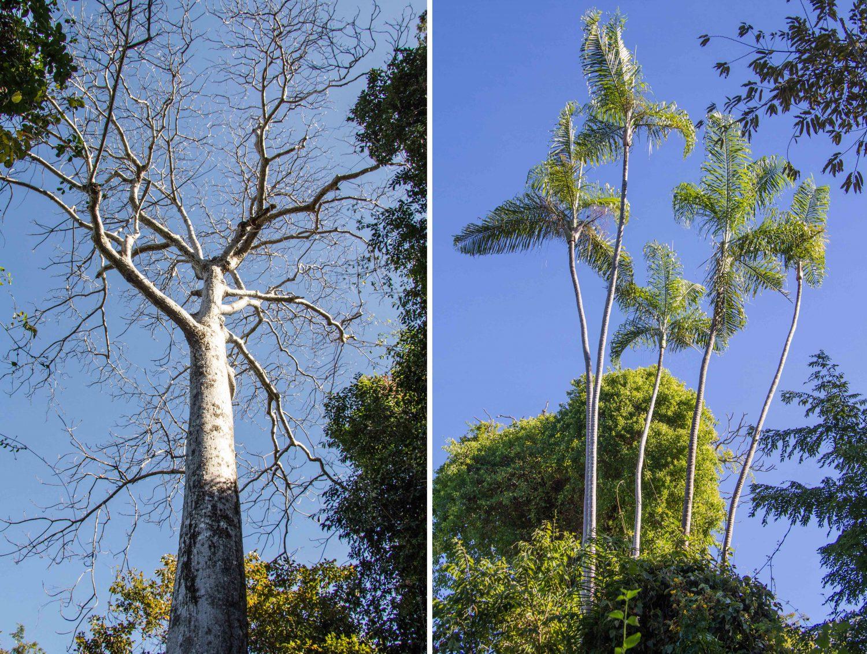 Ankarana Park Madagaskar (13)