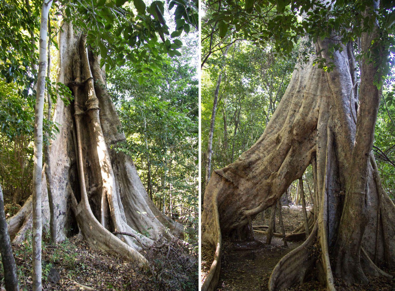 Ankarana Park Madagaskar (17)