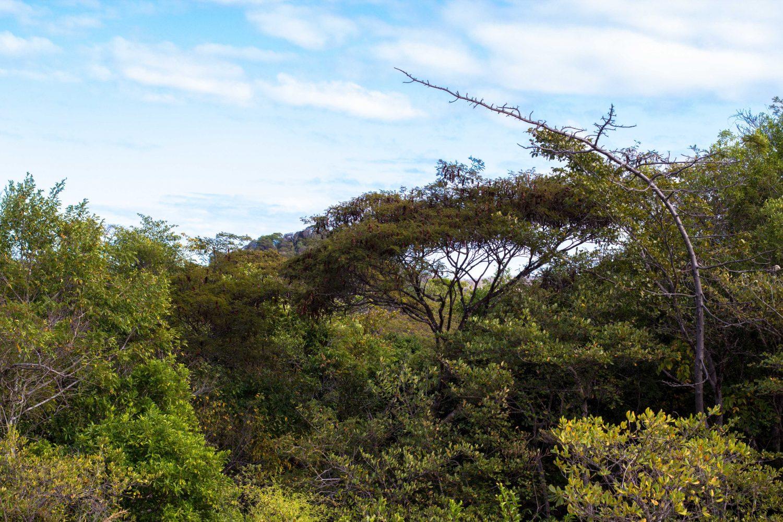 Ankarana Park Madagaskar (3)