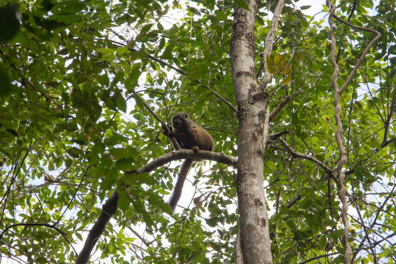 Ankarana Park Madagaskar (36)