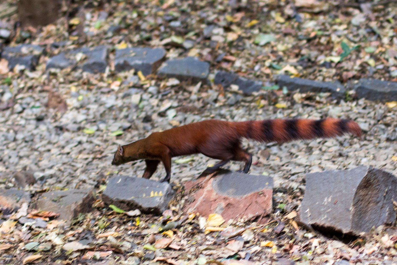 Ankarana Park Madagaskar (37)