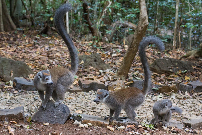 Ankarana Park Madagaskar (41)