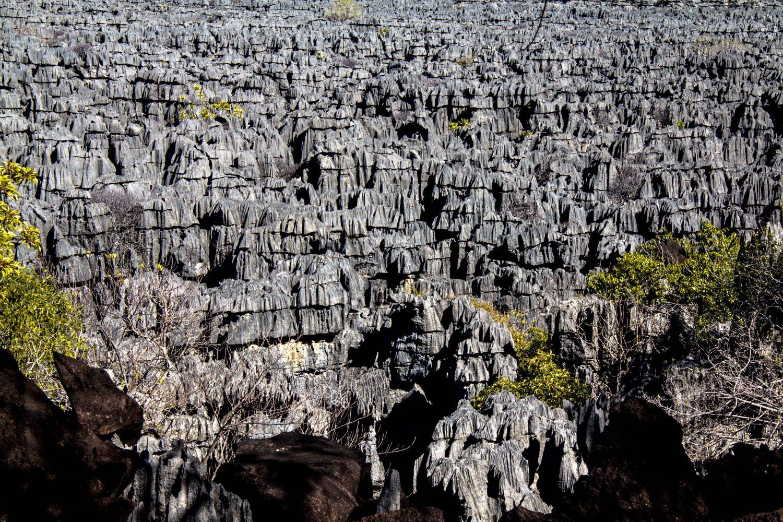 Ankarana Tsingi Madagaskar (2)