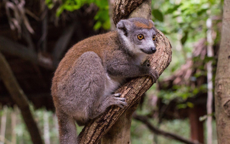 Madagascar (12)