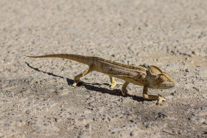 Madagaskar (12)