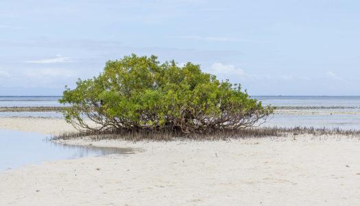 Balicasag i Virgin Island