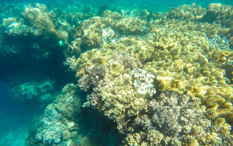 Pamilacan snorkeling